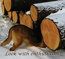 Trina Looks with Enthusiasm by Deb Fedeler