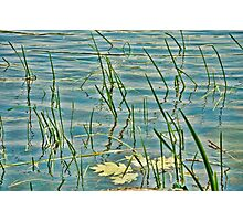 reflections of the reeds and grass Photographic Print