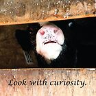 Curious Calf Looks for You, Peek-a-boo! by Deb Fedeler