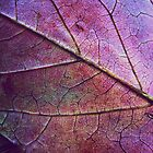 Texture of a Fall Leaf by lindsycarranza