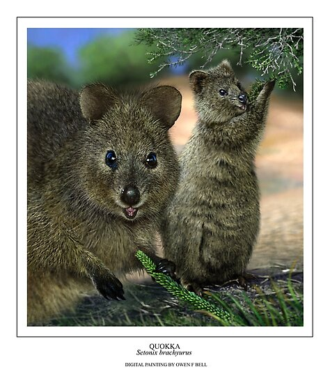QUOKKA (Setonix brachyurus) DIGITAL PAINTING. NOT A PHOTOGRAPH by DilettantO