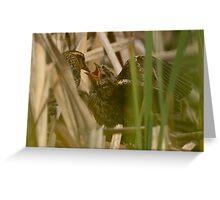 Sneak View of Black Bird Feeding Greeting Card