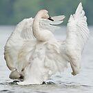 White Swan by Bill Maynard