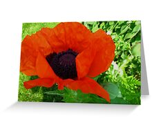 A popping Poppy for Richard Tuvey 2011 Greeting Card