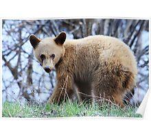 Blonde Bear Poster