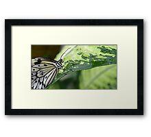 The Smiling Paper Kite Butterfly Framed Print