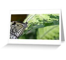 The Smiling Paper Kite Butterfly Greeting Card