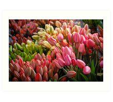 Farmer's Market Tulips Art Print