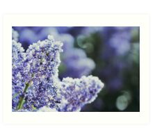 Lilac Wine, I Feel Unsteady, Where's My Love? Art Print