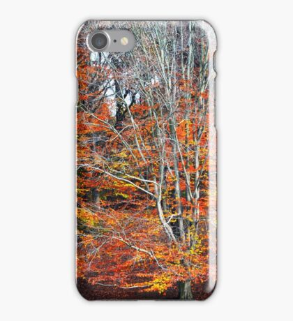 Autumn Beeches iPhone Case/Skin