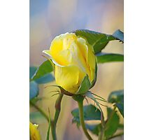 a rose for the teacher... Photographic Print