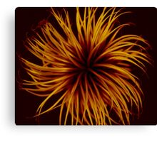 Orange Clematis Abstract Canvas Print
