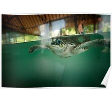 Turtle - Lombok - Indonesia Poster