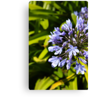 Richardson Bay Flower, San Francisco Canvas Print