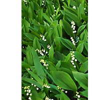 lily of the valley macro Photographic Print