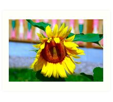 sunflower macro Art Print