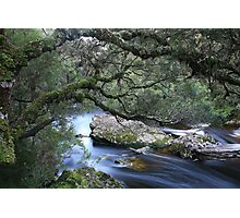 Outstretched Photographic Print