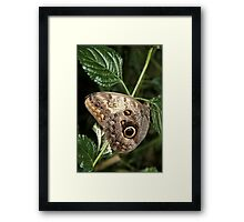 The butterfly eye Framed Print