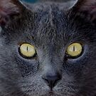 Cats Eyes by © Loree McComb