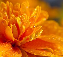 A little drop of sun by Matthew Jones