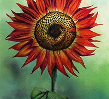 Orange Sunflower by Helen Lush