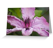 Clematis For Hope Greeting Card