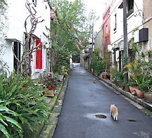 Surry Hills Laneway 2008 by sbyrne