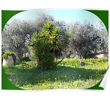 Garden in Provence Poster