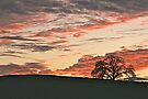 Lone Tree and Smokey Foothill Sunset by John Butler