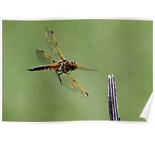 Dragon 1 To Control Tower / 4 Spotted Dragonfly Poster