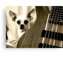 Chihuahua and the Guitar Message Canvas Print