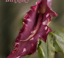 Dragon Arum Birthday Card by Samantha Higgs
