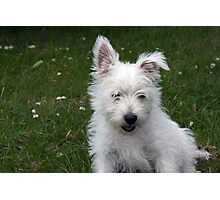 sad dog Photographic Print