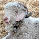 Angora Goats by Lilian Marshall
