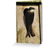 Momma Swallow Greeting Card