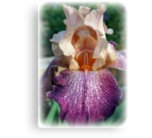 Iris Of Many Colors Canvas Print
