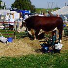 Hereford Bull by Ruth S Harris