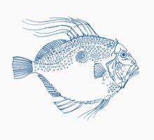 John Dory by Wendy Howarth