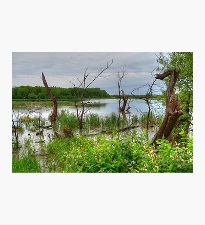 Growth and Decay in the Swamp Photographic Print