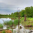 Marsh Mayhem by marshmaven