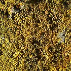 Yellow lichen field by theonewhoisfree