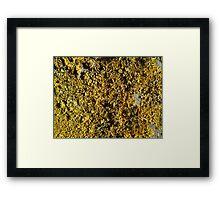 Yellow lichen field Framed Print