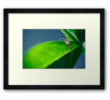 Hey little man Framed Print