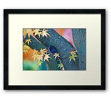 Color Curves In Autumn. Framed Print
