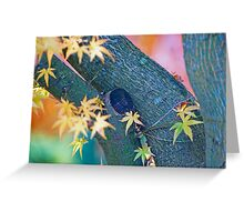 Color Curves In Autumn. Greeting Card