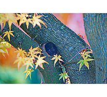 Color Curves In Autumn. Photographic Print