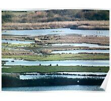 wetland stripes Poster
