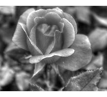 How many petals? Photographic Print