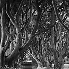 Dark Hedges, Co. Antrim, N. Ireland by Nigel Bryan