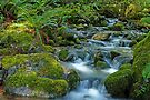 Mount Rainier Wildnerness Area. by Todd Rollins